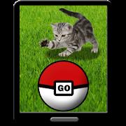 Pocket Kitten GO