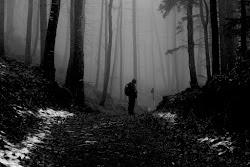 Perso nella selva oscura