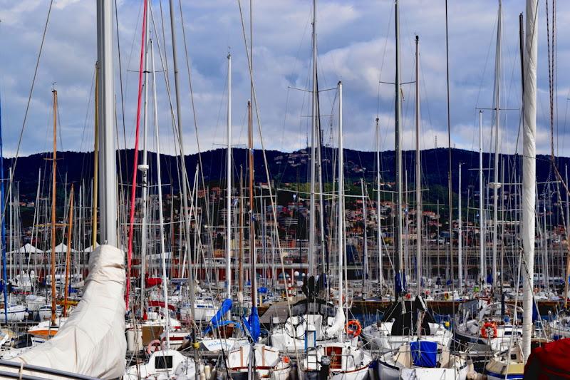 Alberi urbani a Trieste di nogoalba