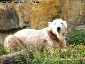 Photo: Hm, vielleicht ist sie ja ganz nett, meint Knut ;-)