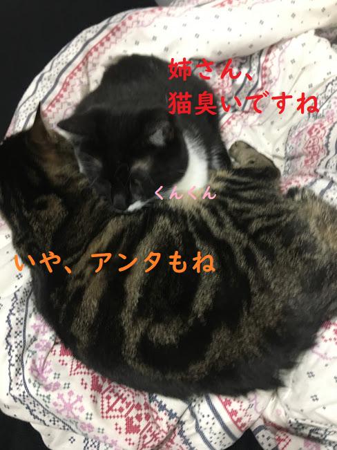 猫のニオイの原因って?部屋飼いしていて臭う時の掃除方法と対策!