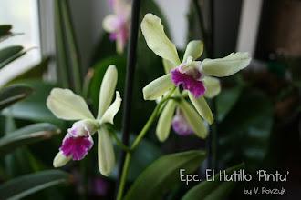 Photo: Epc. El Hatillo 'Pinta'