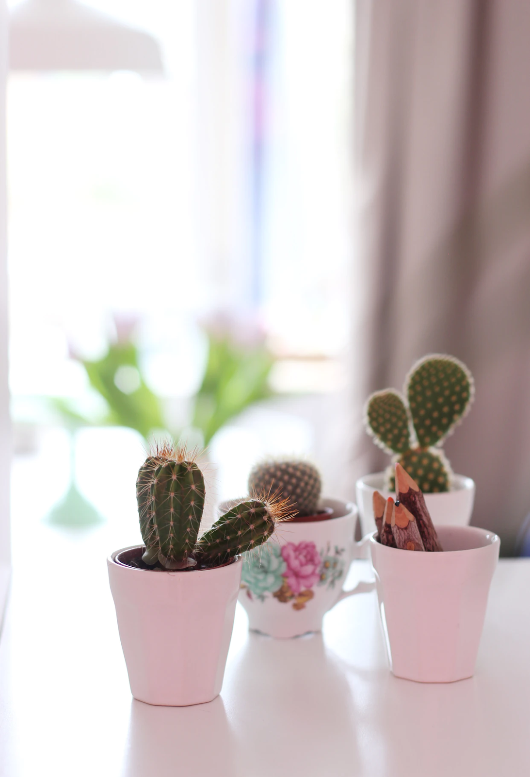 Cacti in mugs