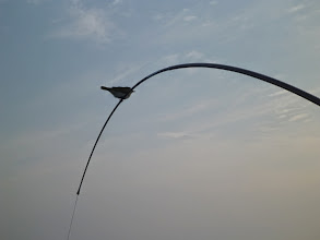 Photo: ゲゲッ! ちっちゃい鳥が止まってるー!