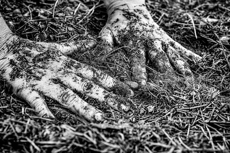 come radici... di elisabetta_de_carli