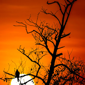 dry by Rusman Budi Prasetyo - Landscapes Starscapes ( dry, nature, sunset, branch, landscape,  )
