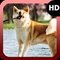 Akita Dog Wallpaper icon