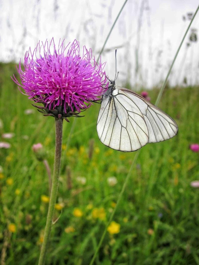 violeta di Fra_frame93