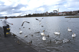 "Photo: Bird feeding on the lake shore, a popular pastime, has led to the lake being called ""the biggest bread soup in the world""."