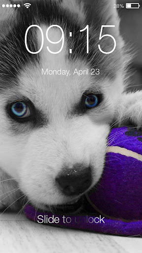 Screenshot for Husky Puppy HD Free PIN Lock in United States Play Store