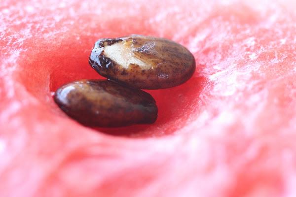 anguria di fabiobaldi