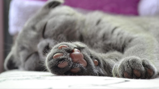 Cute Cat Live Wallpaper: fondos de pantalla hd capturas de pantalla 6