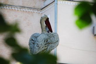 Photo: Дворик с пеликанами. Когда-то тут был шикарный фонтан. Теперь осталась чаша и скульптуры диковинных птиц, в память о былой роскоши.
