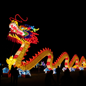 Chinese Dragon by Diane Garcia - Artistic Objects Other Objects ( lights, new year, dragon, night, chinese )