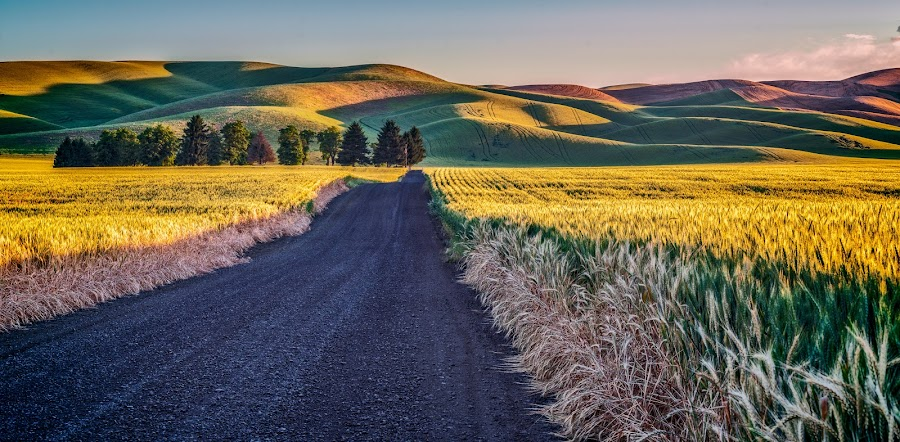 Palouse Sunrise by Mike Moss - Landscapes Prairies, Meadows & Fields ( palouse, nick page )