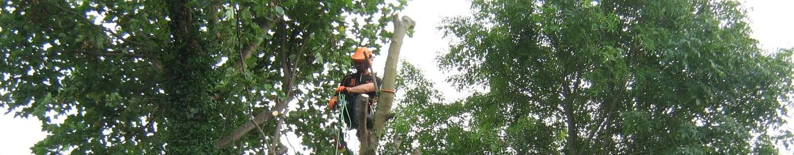 Tree surgeon west midlands
