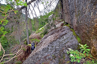 Photo: Mossy ledges near the top of the footwall below a strip of trees.