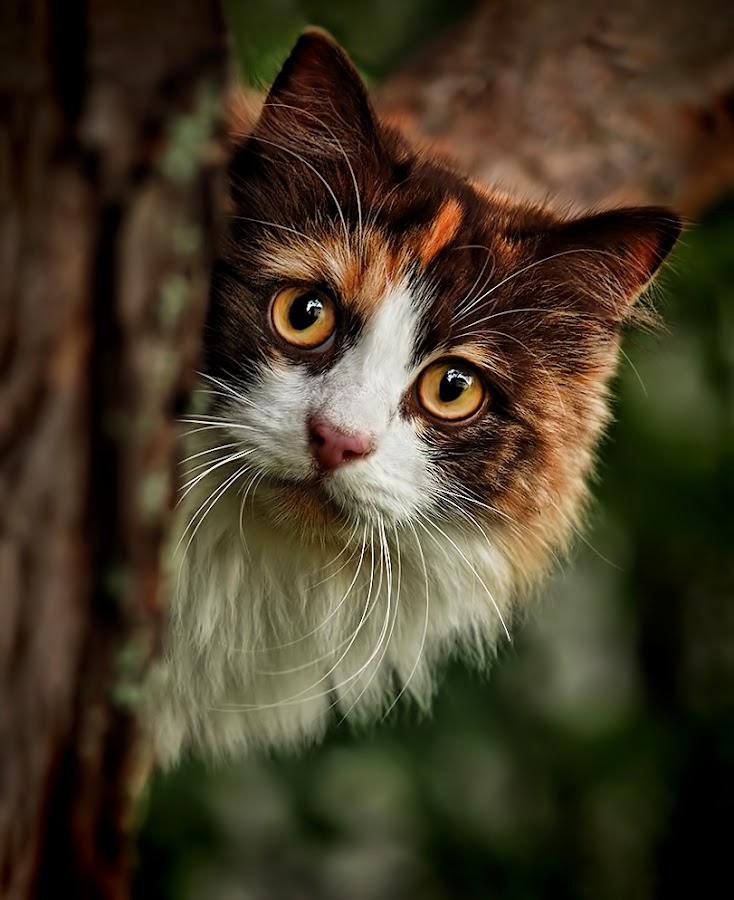 Peek-a-boo by Jane Bjerkli - Animals - Cats Portraits ( playing, cat, tree, pet, peek a boo, pwc84, portrait, eyes, animal,  )
