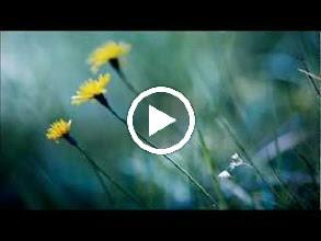 Video: Antonio Vivaldi  Laudate pueri [psalm 112] in C minor (RV 600) - Part II -