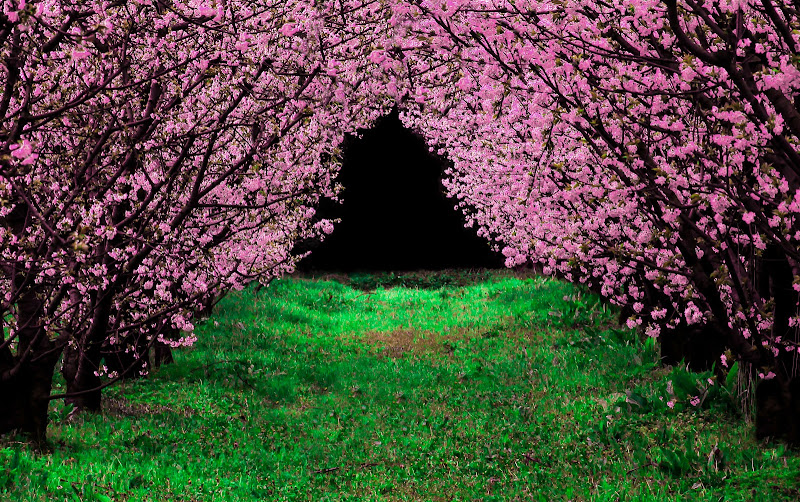 Pinkish tunnel di Dan57