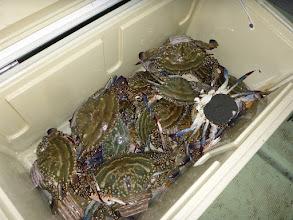 Photo: シブい中、何とかこれだけキャッチできました。 20匹の釣果でした。 しかし、ものすごく大きいものも数匹混じってます。 ・・・間違いなく、ウマいです。