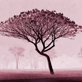The fog by Natalie Ax - Nature Up Close Trees & Bushes ( art, pink, nature, tree, park, mist, fog )