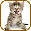 Cat Sounds Ringtones Purr icon
