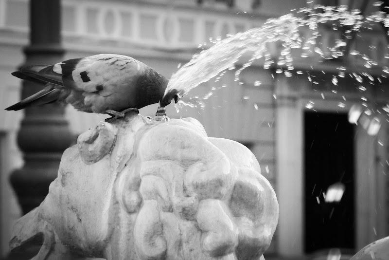 Ubriacarsi d'acqua. di Andrea Franca