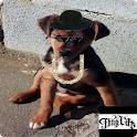 Editor de fotos Thug Life Free icon