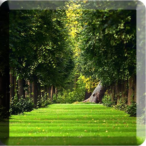 绿叶动态壁纸 個人化 App LOGO-硬是要APP