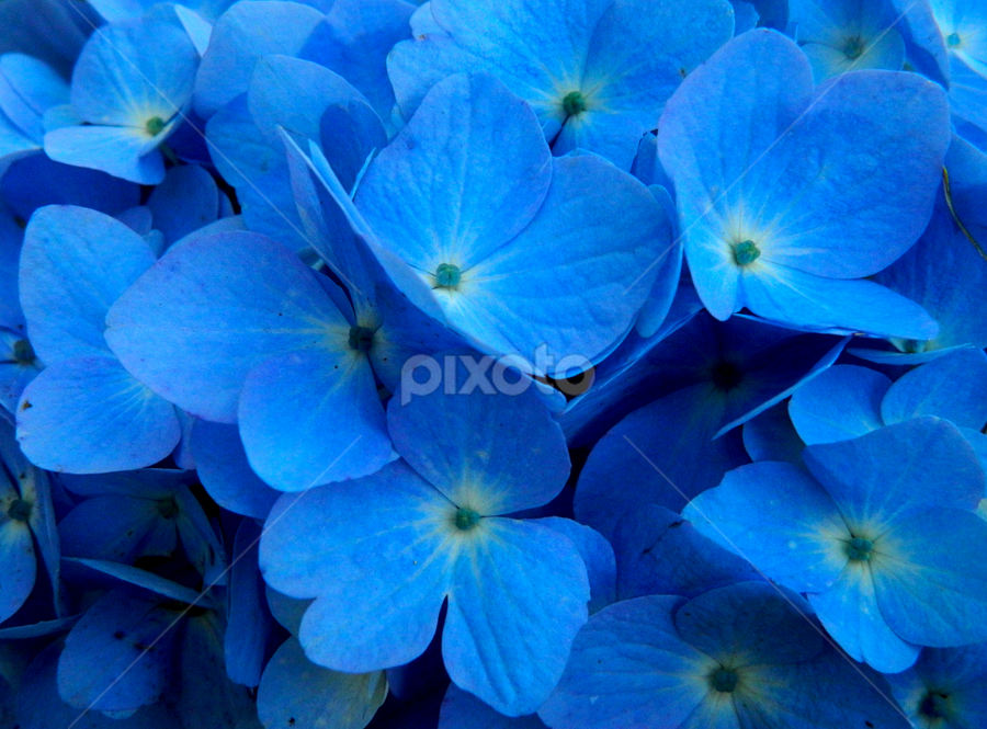 Blue by Ajay Halder - Nature Up Close Flowers - 2011-2013