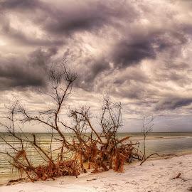 Pet Beach. Dunedin, Florida. by Edward Allen - Landscapes Beaches (  )