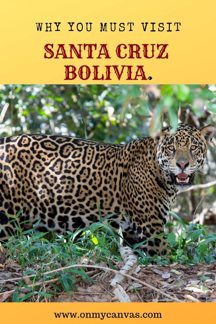 leopard san miguelito ranch near santa cruz bolivia in latin america image for pinterest