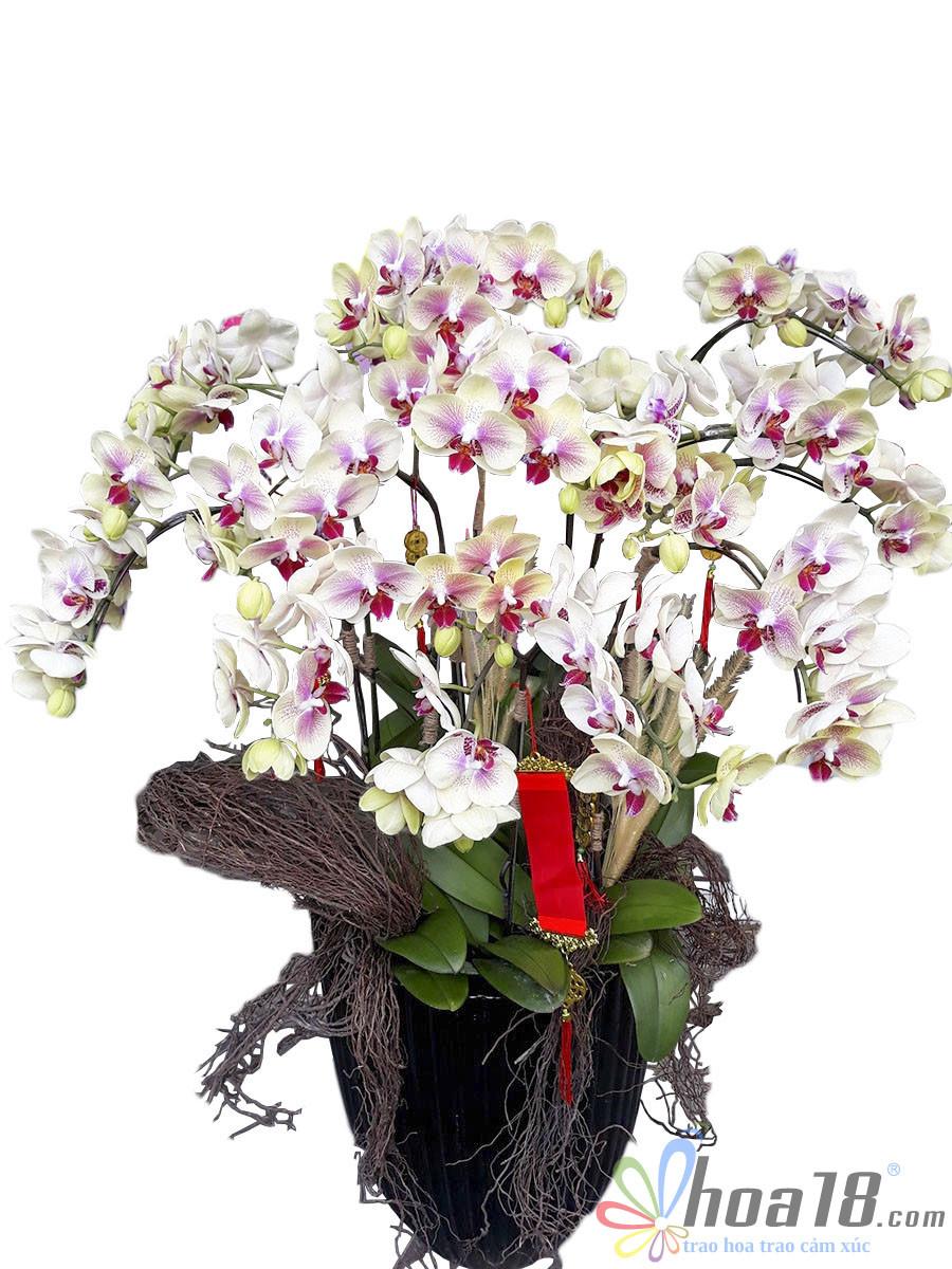 bình hoa lan đẹp