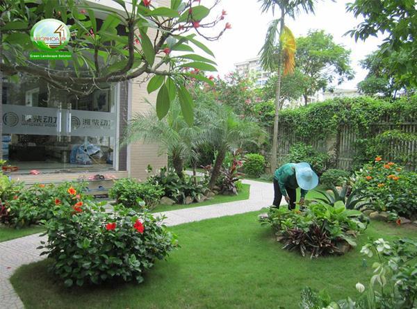 Các công ty cây xanh giúp cho cây cối đẹp mắt, tiết kiệm thời gian, chi phí