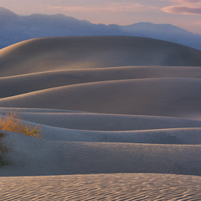 Mesquite Dunes by Phyllis Plotkin - Landscapes Deserts ( death valley national park, sand dunes, california, sunset, mesquite dunes )