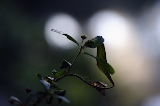 Photo: photography is my quiet place... peace :)