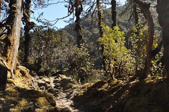 Photo: Remontée de la vallée de la Sambuwa khola depuis Torontong