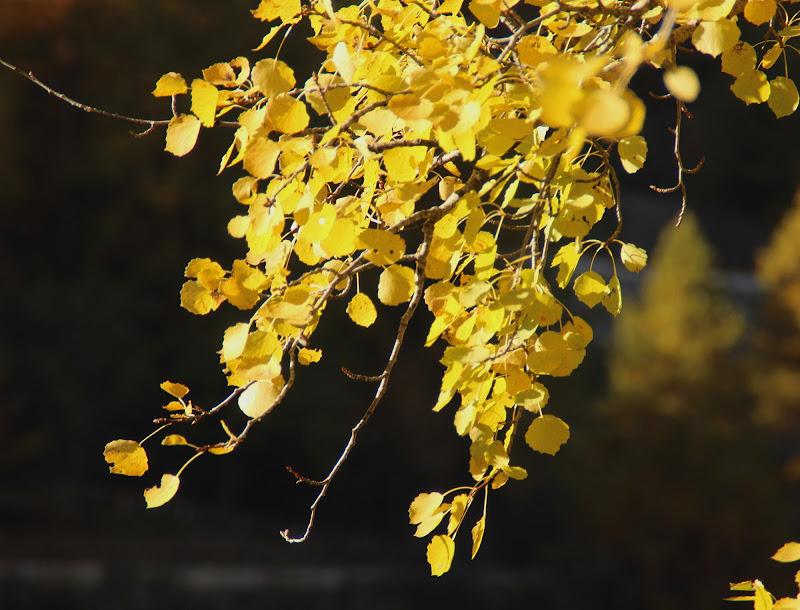 giallo autunnale di amaranto21