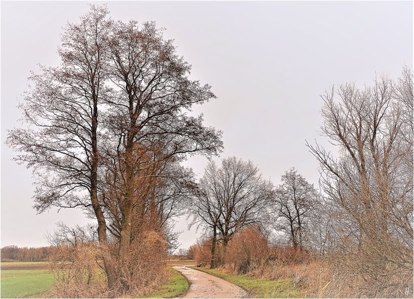 2019-01-12 zwischen Lüchow + Wustrow - ZekeArt-Versionen (6) Kurve