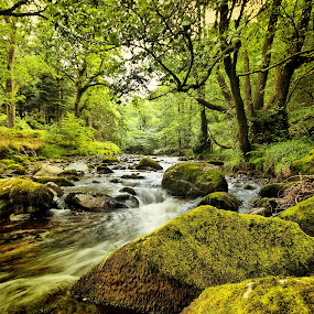 Mountain stream  by Peter Wyatt - Landscapes Waterscapes ( stream, waterscape, highlands, landscape, river,  )