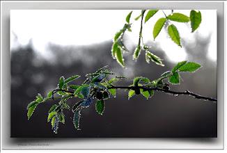 Foto: 2012 02 19 - R 11 10 03 055 - P 157 - Blattgrün