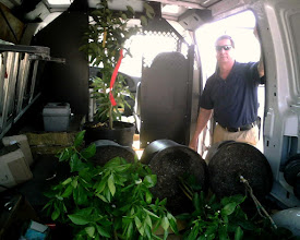 Photo: Stewart transporting our fruit trees
