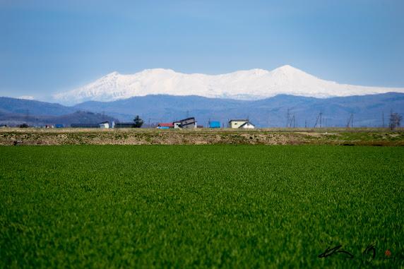 くっきりと浮かびあがる十勝岳連邦@北竜町板谷地区