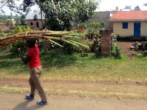 Photo: Rubavu district - sugar cane