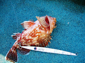 Photo: きょうの貴重な魚です!