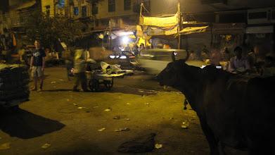 Photo: Stinky night market with stray cows