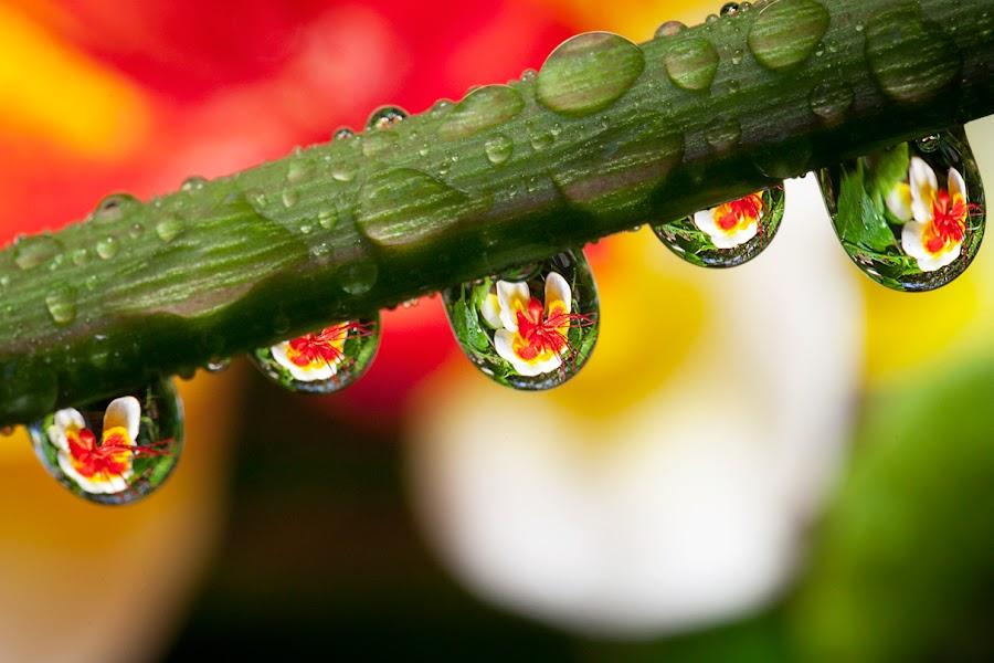 by Charlie Rosadi - Nature Up Close Water