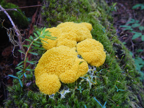 Photo: Fuzzy fungus
