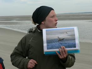 Photo: balade à la découverte des phoques